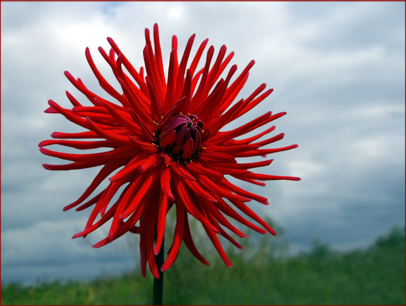 "photo ""Dahlia needle"" tags: ,"