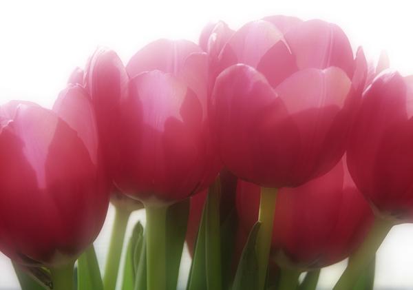 "photo ""Celebrate"" tags: nature, flowers"
