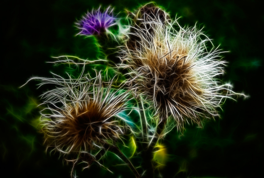 "photo ""The thistle"" tags: nature, abstract, flowers"