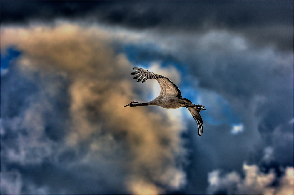 "photo ""Freedom"" tags: nature, wild animals"