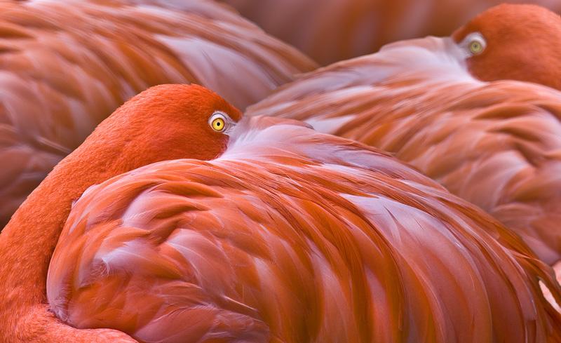 "photo ""Flamingo's"" tags: nature, travel, South America, wild animals"