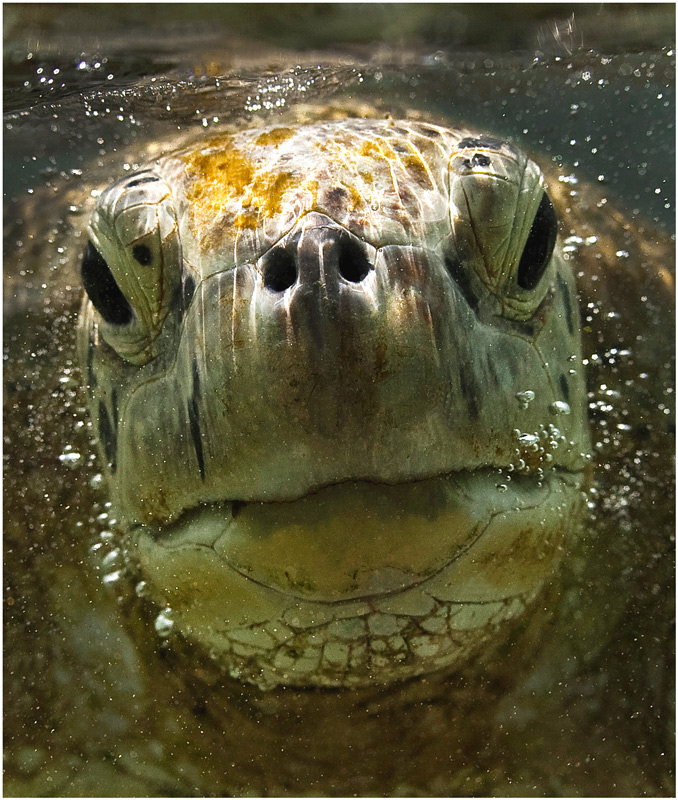 "photo ""Принес ?"" tags: underwater, nature, wild animals"