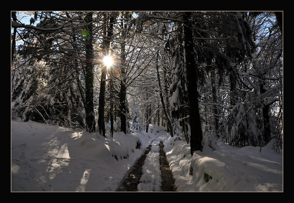 """photo """"The forest in Winter"""" tags: landscape, forest, winter"""