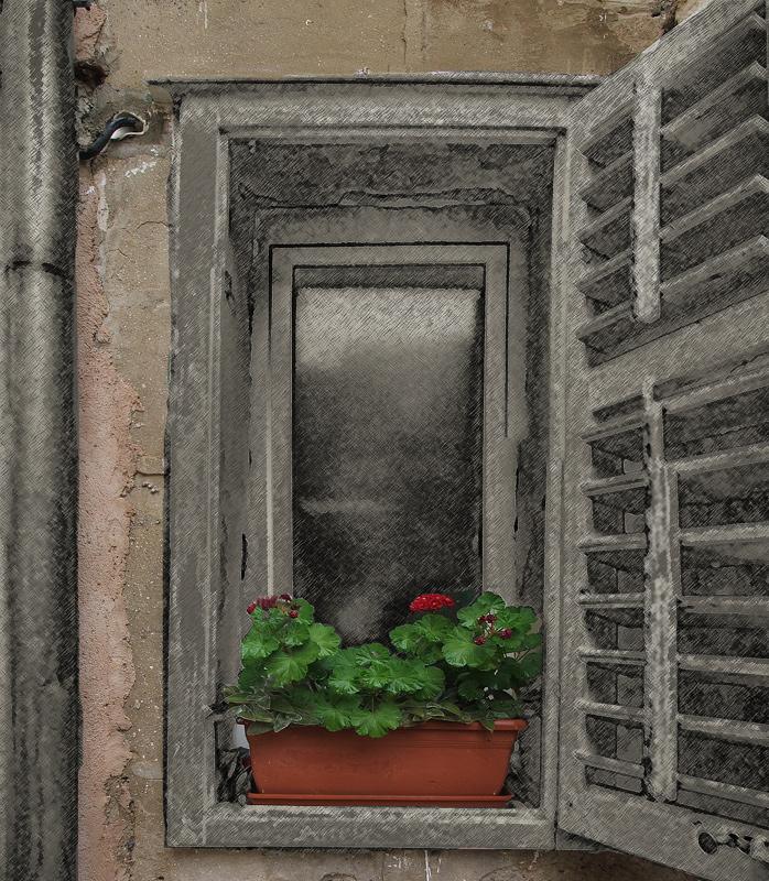 "photo ""Window XPflowers"" tags: city,"