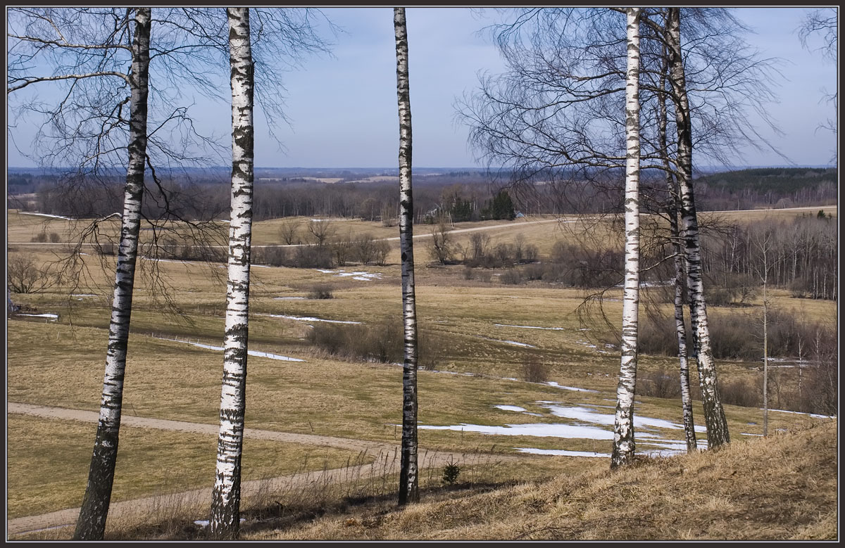 """photo """"Spring song of birches"""" tags: landscape, spring"""
