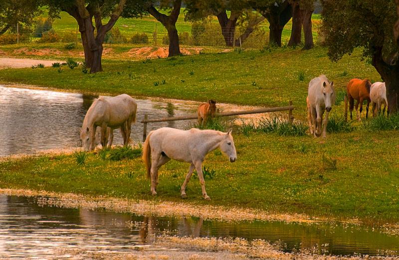 "photo ""BREEDING"" tags: landscape, nature, forest, pets/farm animals"