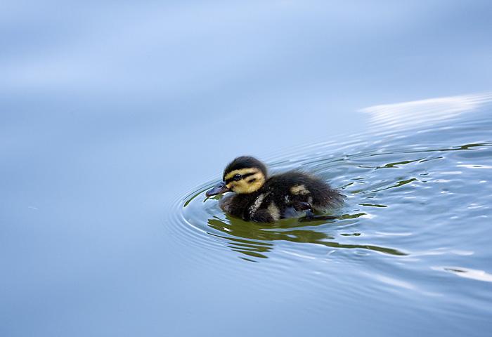 "photo ""Child"" tags: nature, wild animals"