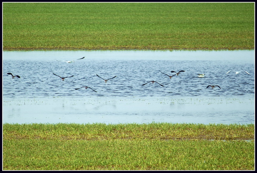 "photo ""The symmetry of nature or ""Chibisa flying"""" tags: landscape, nature, spring, wild animals"