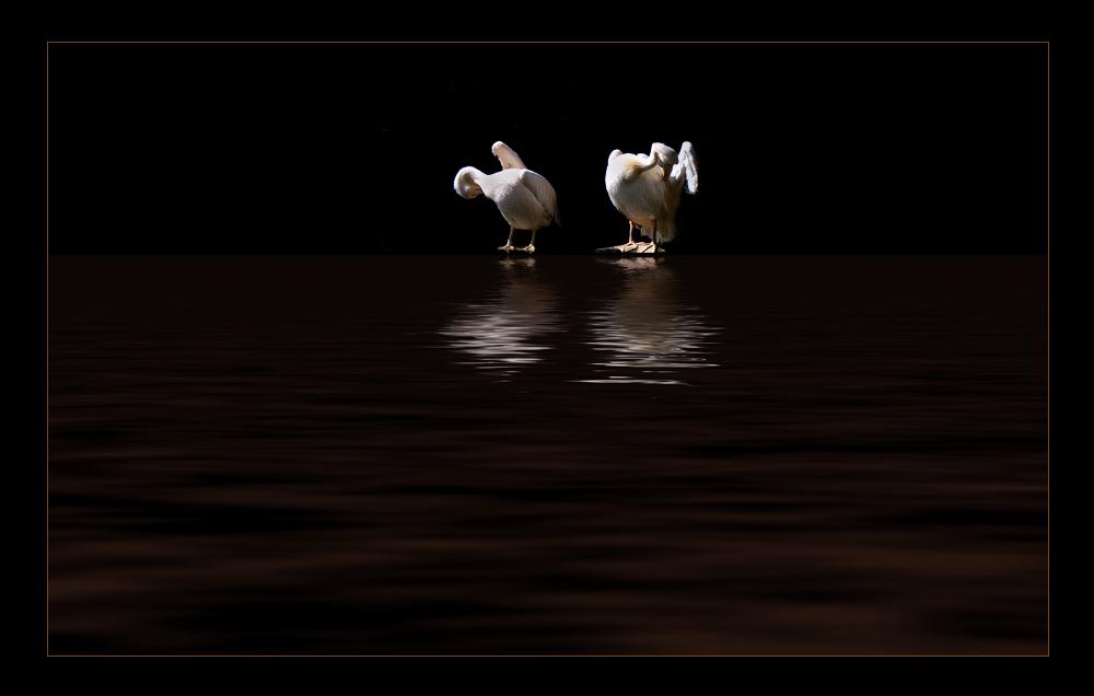 """photo """"pelikan"""" tags: montage, digital art,"""