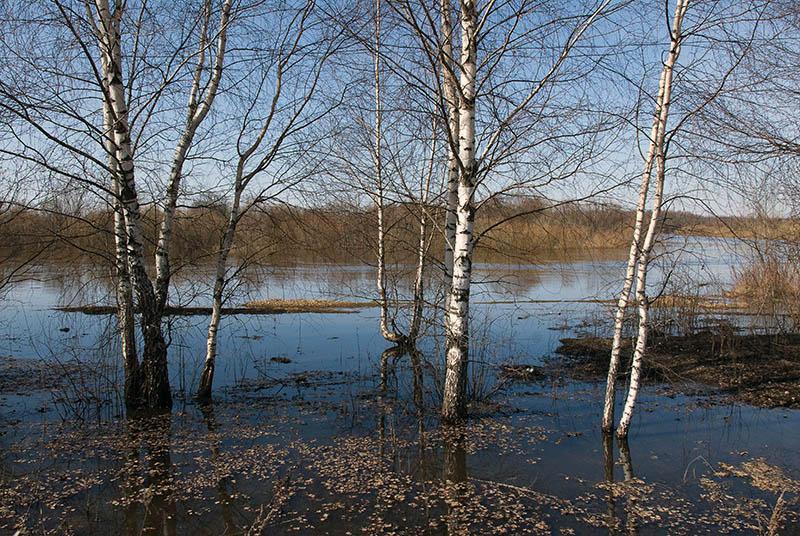 "photo ""Klyazma river"" tags: landscape, spring"