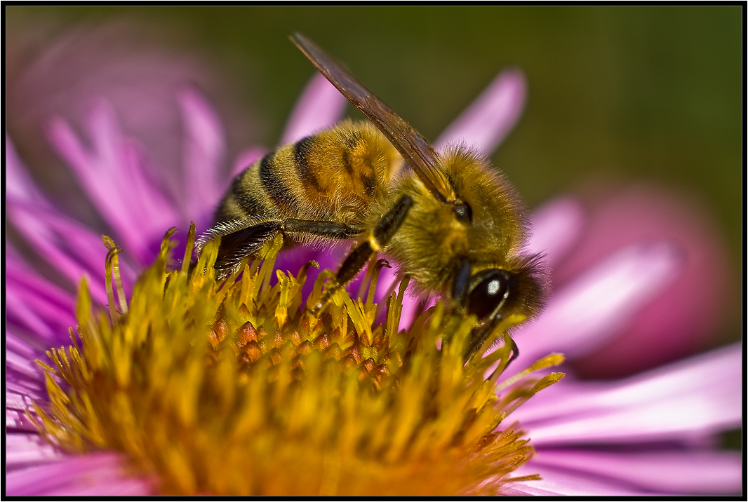 """photo """"***"""" tags: nature, insect"""