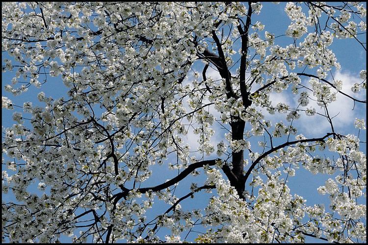 "photo ""April decor / Красота весны"" tags: landscape, forest, spring"