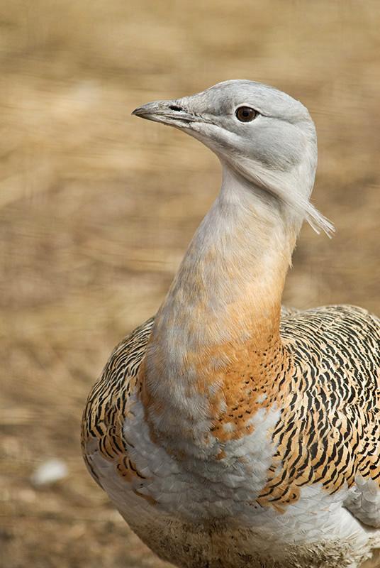 """photo """"Gloria mundi"""" tags: nature, wild animals"""