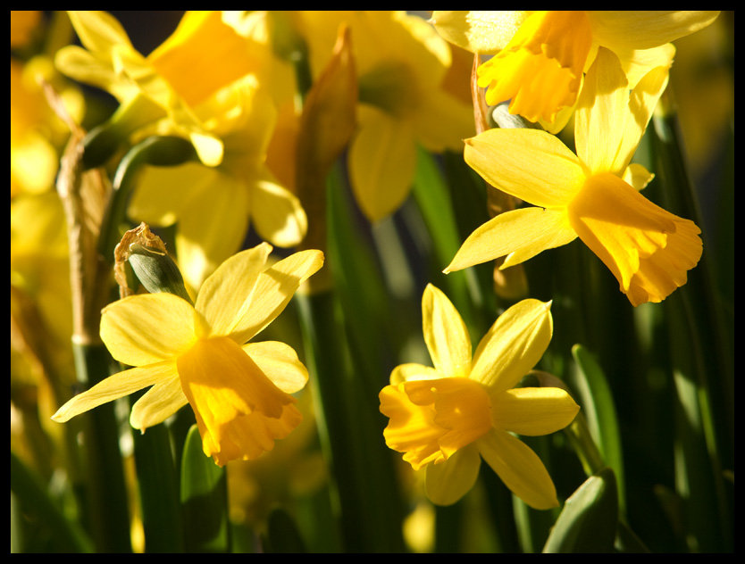 "photo ""Golden Easter"" tags: nature, flowers"