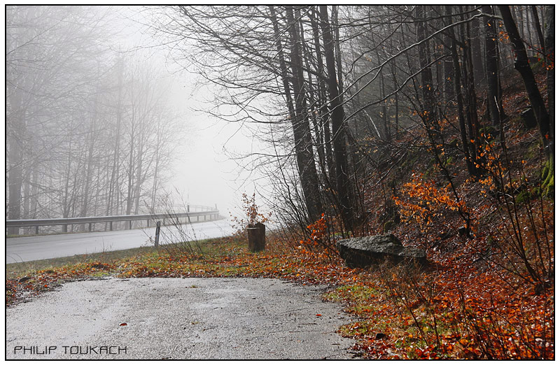 "photo ""Schwarzwald"" tags: landscape, travel, Europe, forest"