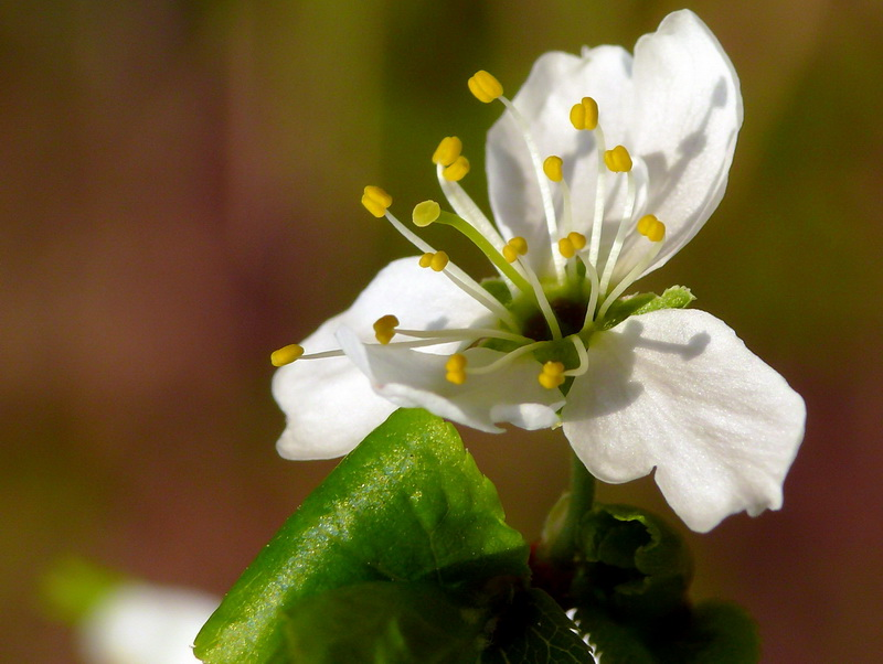 """photo """"Little White 2"""" tags: travel, nature, Europe, flowers"""