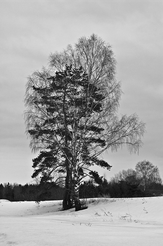 "photo ""***"" tags: black&white, landscape,"