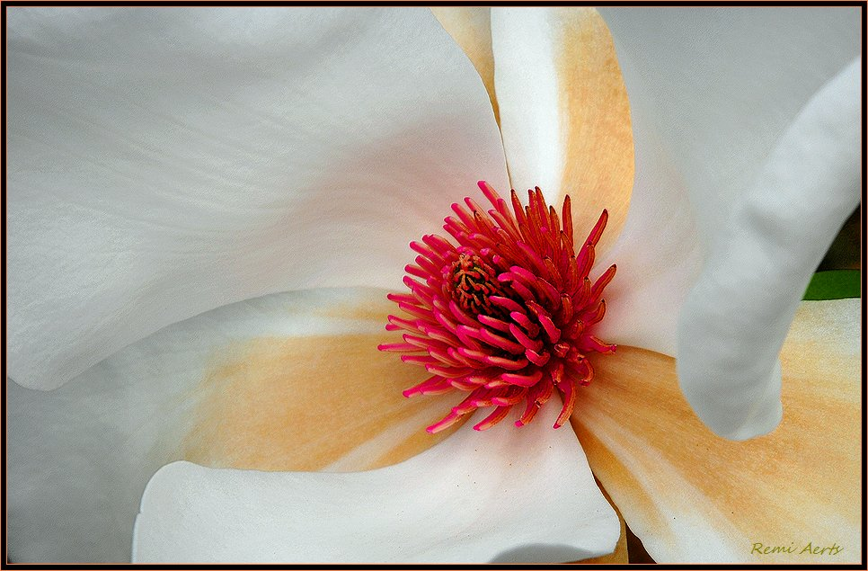 """photo """"look insite"""" tags: nature, macro and close-up, flowers"""