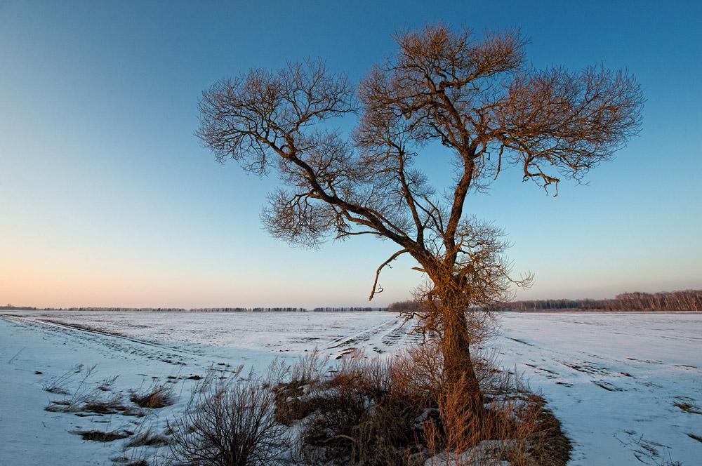 "фото ""Evening alone"" метки: пейзаж, весна"