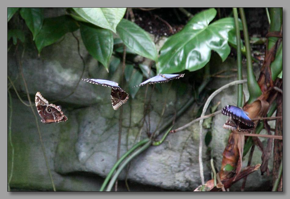 "photo ""Танец в воздухе-4"" tags: nature, macro and close-up, insect"