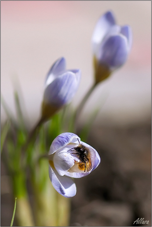 """photo """"***"""" tags: nature, landscape, insect, spring"""