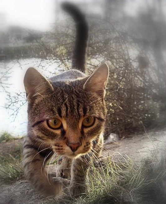 "photo ""кот,охота,фауна"" tags: nature, genre, pets/farm animals"