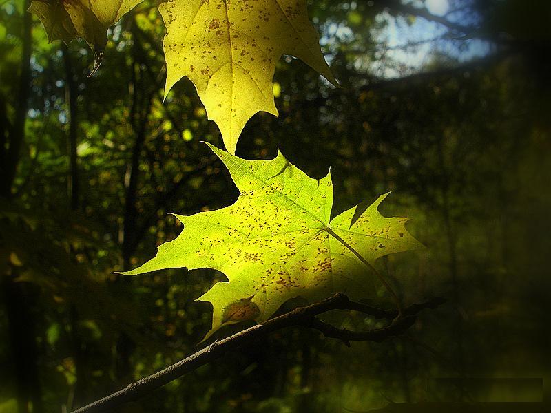 """photo """"природа,оень,свет,листья"""" tags: landscape, fragment, autumn"""