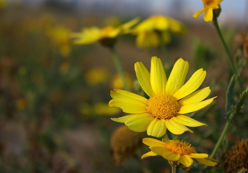 "photo ""Yellow"" tags: ,"