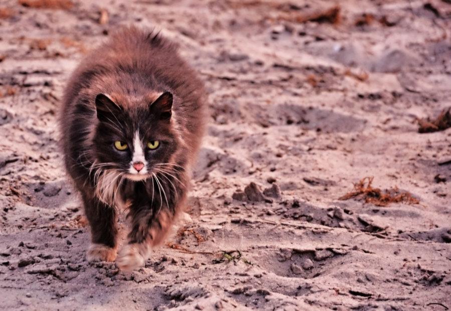 "photo ""March cat Desert"" tags: nature, pets/farm animals"