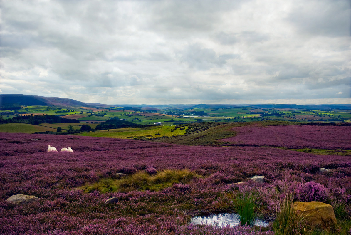 "photo ""Simonside"" tags: landscape, summer"