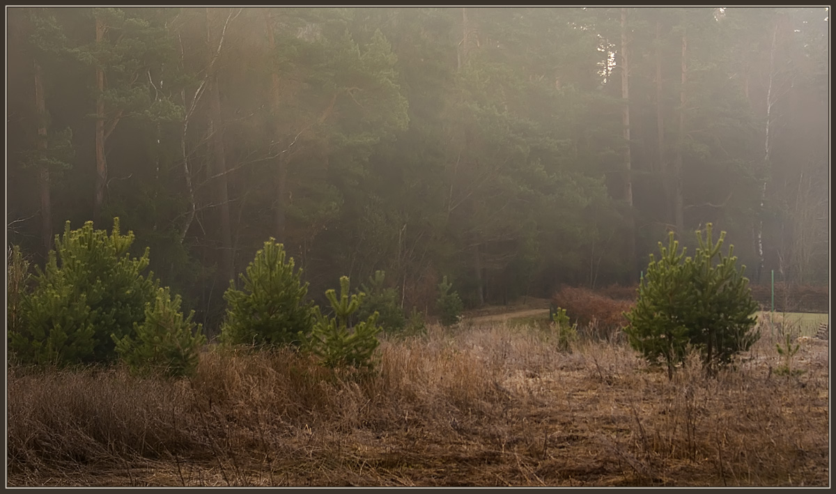 "photo ""Morning on the skirts of a forest"" tags: landscape, spring"