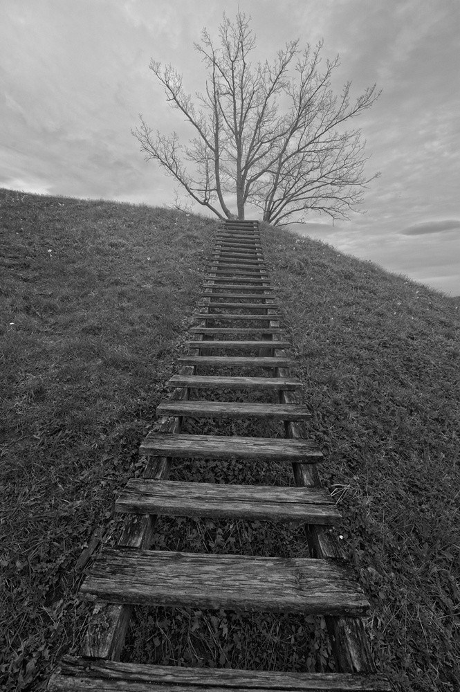 """фото """"Stairs to heaven (or tree)"""" метки: ,"""