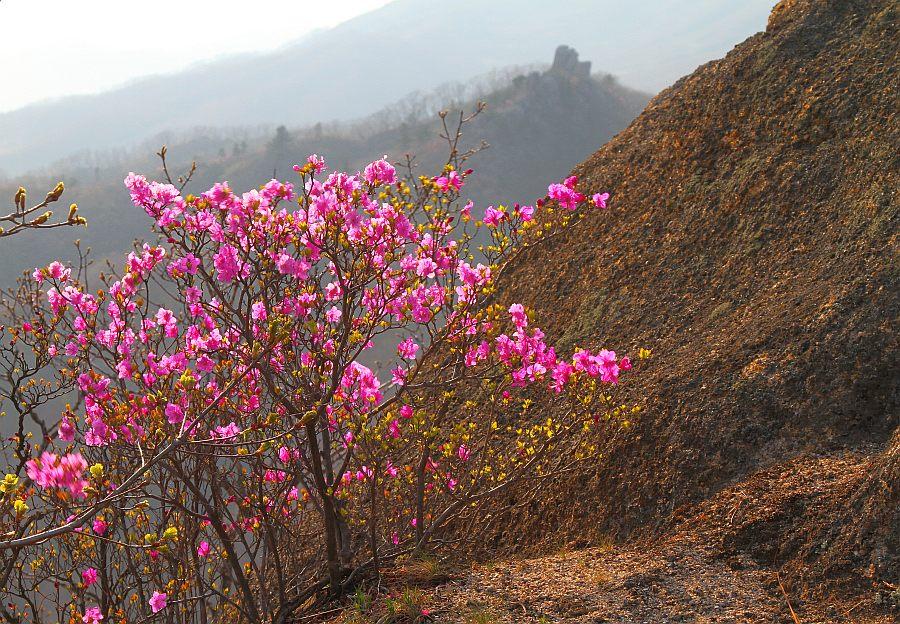 суровом климате фотографии весна в приморье смотрю себя