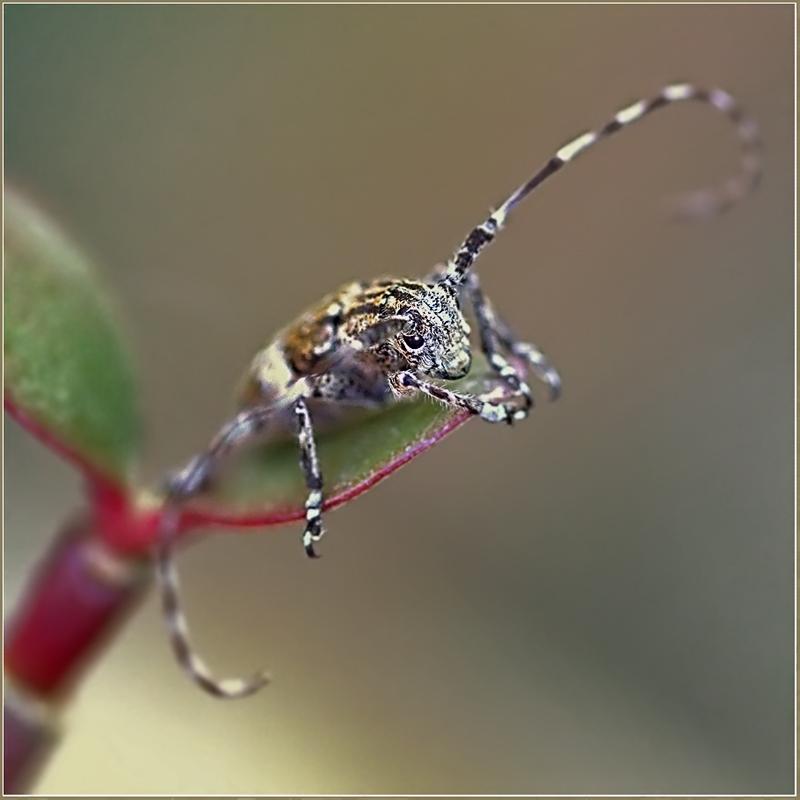 """фото """"Я в печали..."""" метки: природа, макро и крупный план, насекомое"""