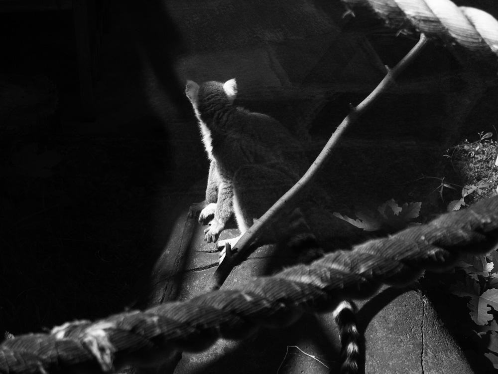 """фото """"отвернулся"""" метки: природа, черно-белые, дикие животные"""
