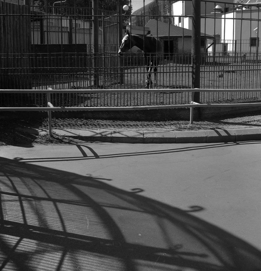 "photo ""***"" tags: nature, black&white, wild animals"