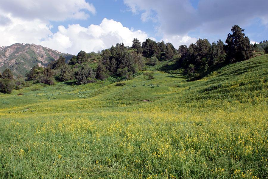 """фото """"Цветочная поляна"""" метки: пейзаж, весна, горы"""