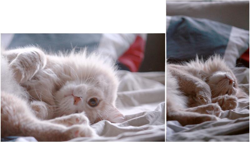 """фото """"Cat <3"""" метки: природа, домашние животные"""