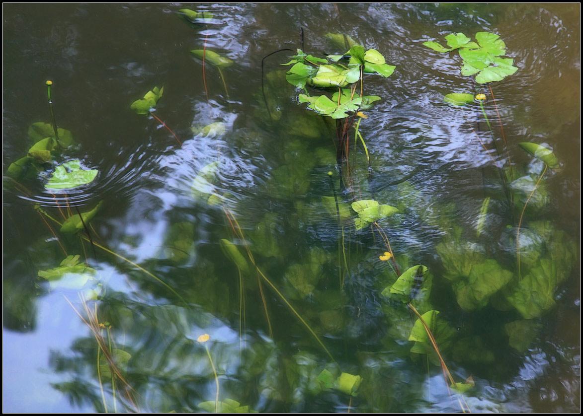 """фото """"под прохладой воды"""" метки: пейзаж, природа, вода, цветы"""