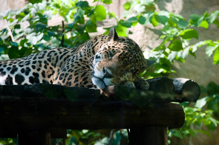 "photo ""Afternoon nap"" tags: nature, wild animals"