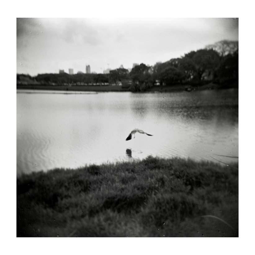 "фото ""Fly bird"" метки: черно-белые,"