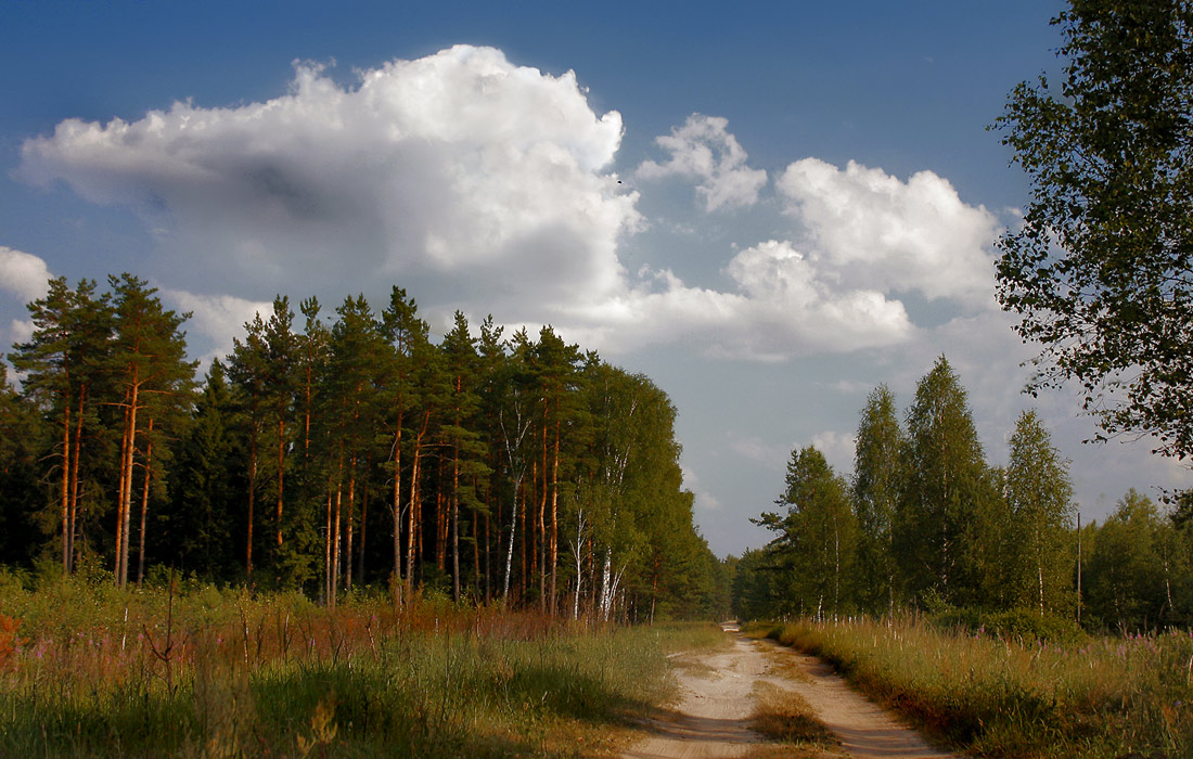 "photo ""Forest road."" tags: landscape, forest, summer"