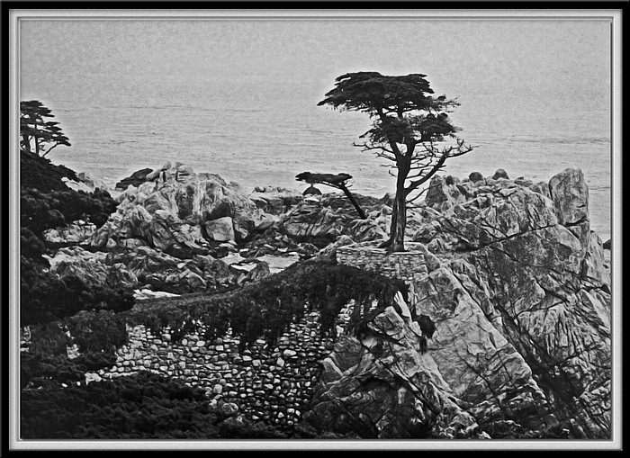 "photo ""Lone Cypress"" tags: landscape, travel, North America"