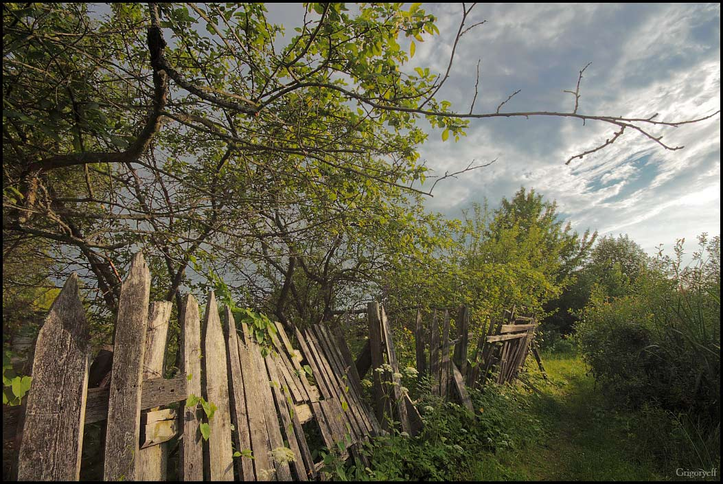 "photo ""Abandoned garden. Nobody apple-trees"" tags: landscape, summer"