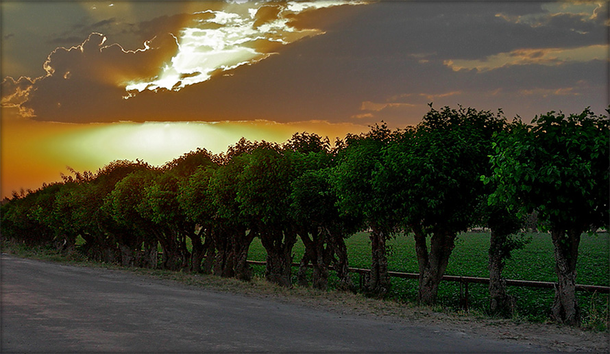 "photo ""mulberry"" tags: landscape, summer, sunset"