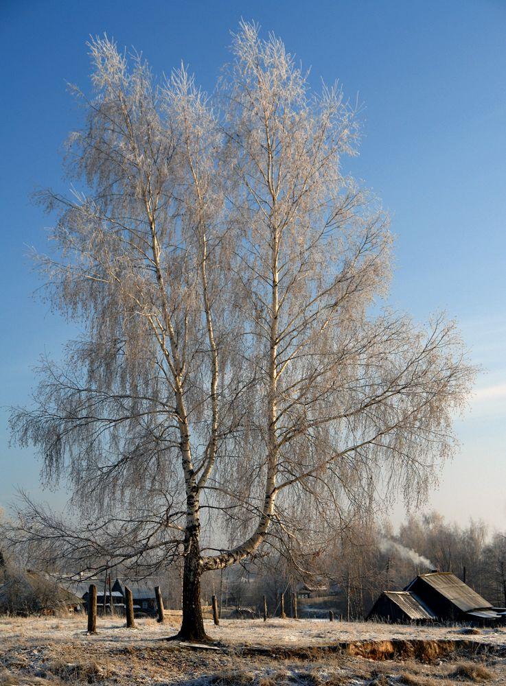 """фото """"Деревенский пейзаж."""" метки: пейзаж, зима"""
