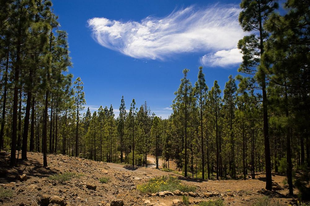 """фото """"Привидение"""" метки: пейзаж, лес, облака"""