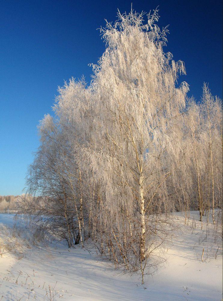 """фото """"Морозное утро."""" метки: пейзаж, зима"""