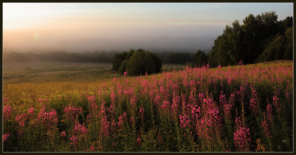 """фото """"Иван-чай"""" метки: пейзаж,"""