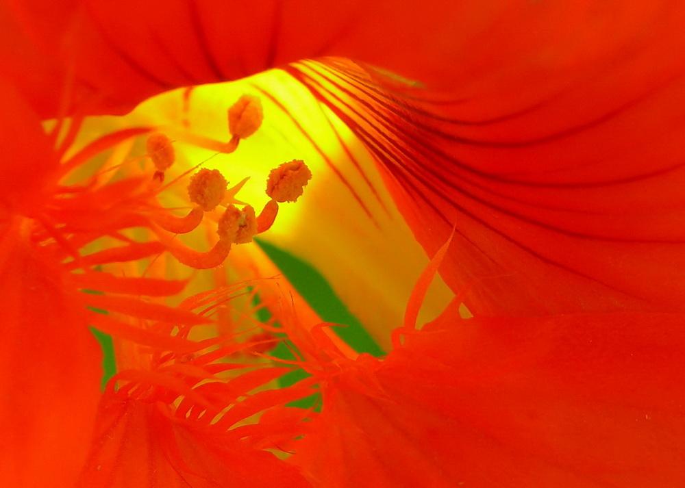 """фото """"Yelow Eye"""" метки: природа, цветы"""